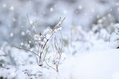 First snow impression. Beautiful winter concept snowfall Stock Images