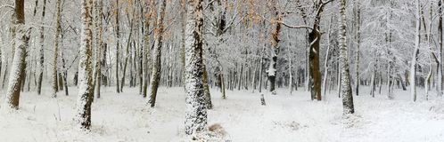 First Snow In A Forest Stock Photo