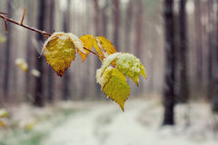 First snow on the leaves Stock Images