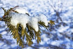 The first snow. Lies on a tree branch Stock Images
