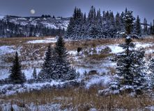 First snow with moon Stock Image