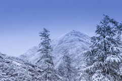 The first snow in mountains Stock Image