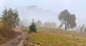 First snow in the mountains. Stock Photography