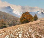 First snow in the mountains Stock Image