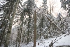 First snow in the mountains Royalty Free Stock Images
