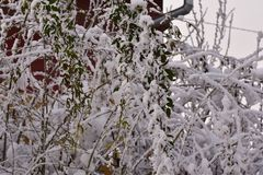 The first snow at my home royalty free stock photos