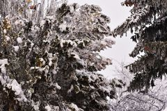The first snow at my home stock photo