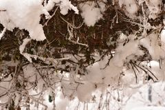 The first snow at my home royalty free stock photography