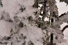 The first snow at my home stock photography