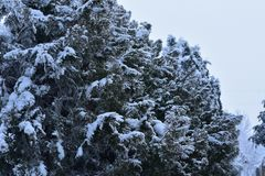 The first snow at my home royalty free stock image