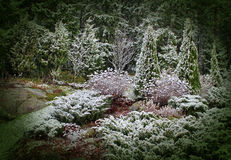 First snow in mystic garden. First winter snow has fallen into mystic garden Royalty Free Stock Photo