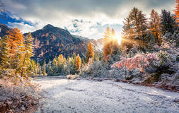 First snow in Naturpark Fanes-Sennes-Prags. Colorful autumn landscape in Dolomite Alps, Braies Lake location, Italy, Europe Royalty Free Stock Photography
