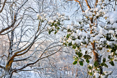 First snow in the park. Royalty Free Stock Images