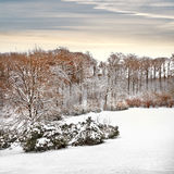 First snow in the park. Royalty Free Stock Photos