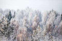 First snow in the park. Winter landscape Royalty Free Stock Photography