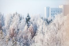 First snow in the park. Winter landscape Stock Image