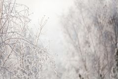 First snow in the park. Winter landscape Stock Photography