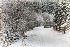 First snow in the park Royalty Free Stock Image