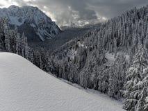 First Snow Rainier Stock Photography