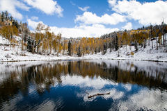 First Snow. Of the season falling on a mountain pond surrounded by golden aspens trees Stock Images