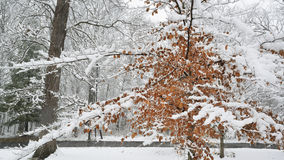 First snow of season. Stock Images