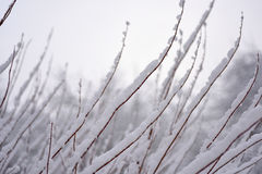 The first snow in season. Royalty Free Stock Photos