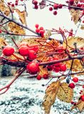 First snow. Seomething beutiful is always exists , just notice that Royalty Free Stock Images
