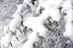First snow Stock Images