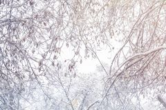 First snow. Snow flakes in the air. White branches on the trees. Winter Stock Photo