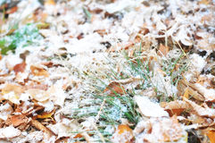 First snow after snowfall on falling leaves and grass background. First snow after snowfall on autumn falling leaves and grass background , winter is coming royalty free stock image