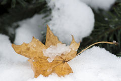 First snow on trees and yellow leaf. Change of season from fall to winter. Close up stock image