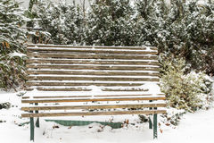 First snow on the tuja and garden bench. Royalty Free Stock Photo