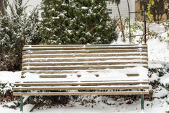 First snow on the tuja and garden bench. Stock Image