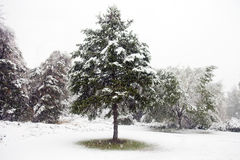 First Snow of Winter Stock Image