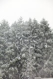 First Snow of Winter Royalty Free Stock Image