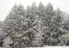 First Snow of Winter Stock Photography