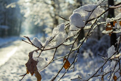 The first snow in the winter Royalty Free Stock Photos