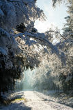 The first snow in the winter Stock Photography