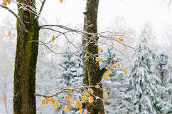 first snow in the Woods Stock Photography