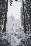 First Snow in the Woods Royalty Free Stock Images