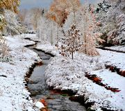 First Snow. Of the year in by a Colorado stream Stock Images