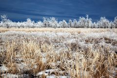 After the first snowfall Royalty Free Stock Photo