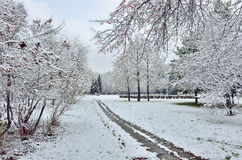 First snowfall in a city park Royalty Free Stock Photography