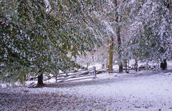 First snowfall at fall Stock Images