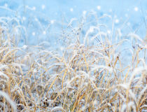 First snowfall impression Royalty Free Stock Photo