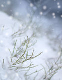 First snowfall impression Royalty Free Stock Image