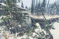 First snowfall on the taiga Siberian river stock image