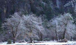 First snowfall Yosemite National Park near Bridalveil Falls stock photos