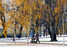 First snowing. Birches are yellow in contrast with first snow in the city garden Riga Latvia November stock photos