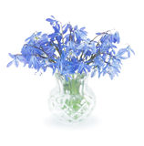 First spring blue  flowers in a small  vase Stock Photography